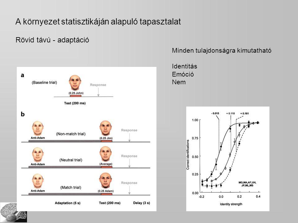 A környezet statisztikáján alapuló tapasztalat Rövid távú - adaptáció Minden tulajdonságra kimutatható Identitás Emóció Nem