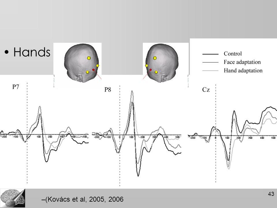 43 Hands –(Kovács et al, 2005, 2006