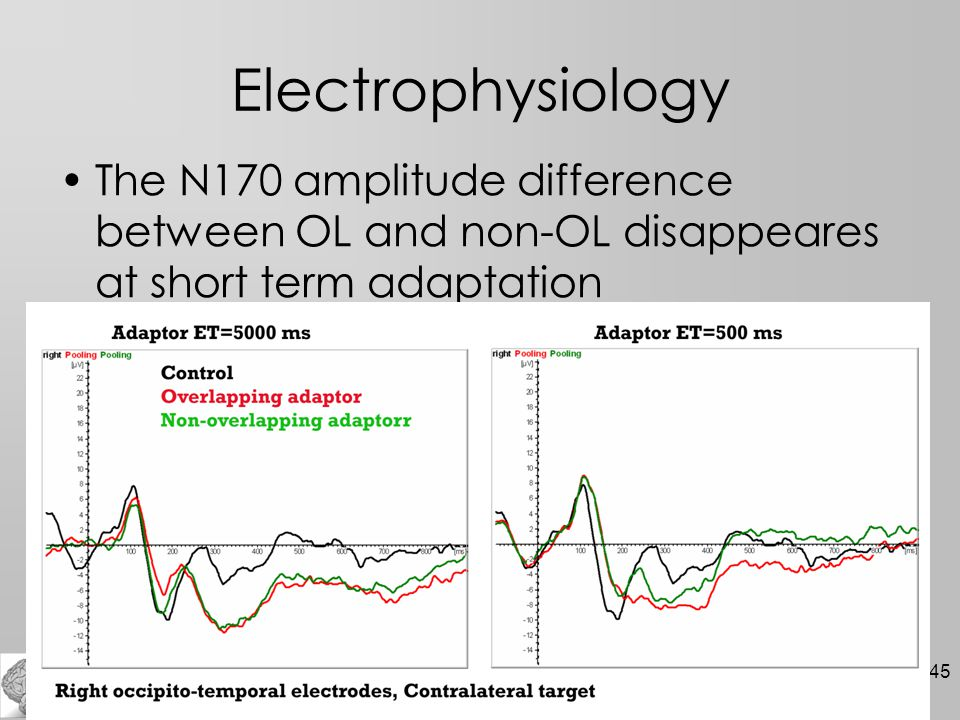 45 Electrophysiology The N170 amplitude difference between OL and non-OL disappeares at short term adaptation