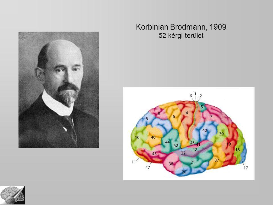 Korbinian Brodmann, 1909 52 kérgi terület