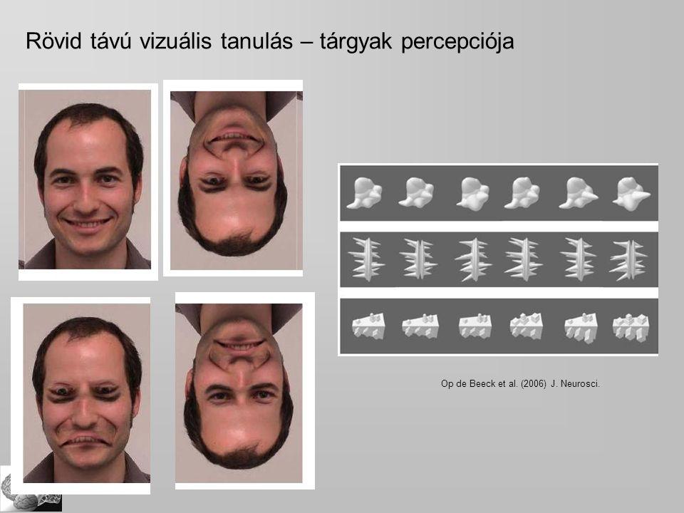 Rövid távú vizuális tanulás – tárgyak percepciója Op de Beeck et al. (2006) J. Neurosci.