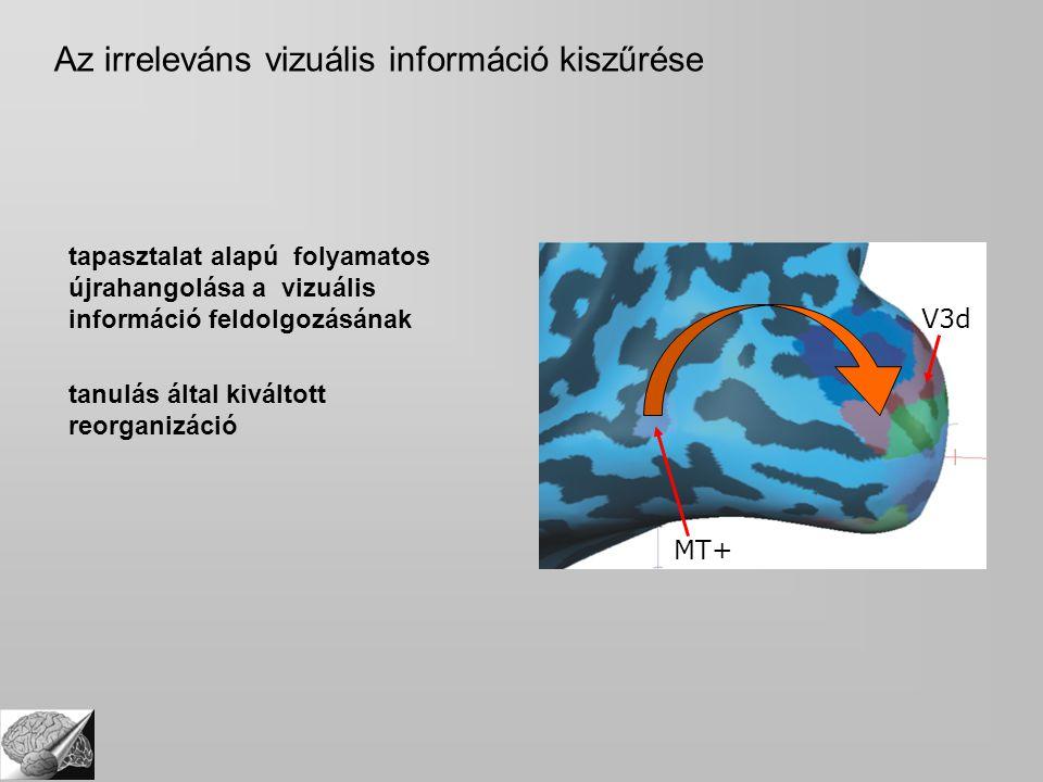 tapasztalat alapú folyamatos újrahangolása a vizuális információ feldolgozásának tanulás által kiváltott reorganizáció V3d MT+ Az irreleváns vizuális információ kiszűrése