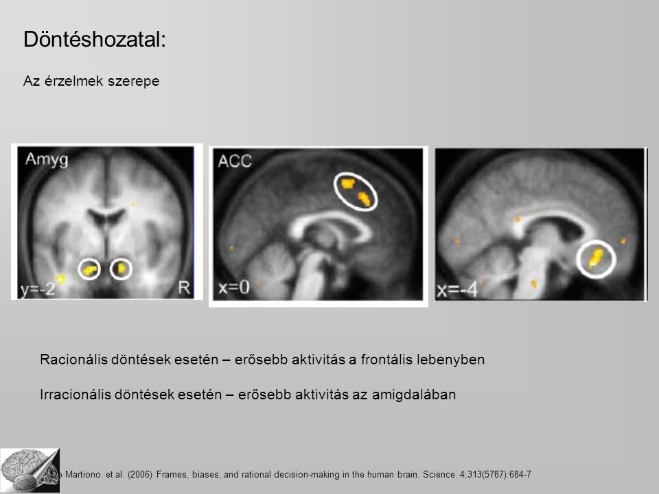 Racionális döntések esetén – erősebb aktivitás a frontális lebenyben Irracionális döntések esetén – erősebb aktivitás az amigdalában De Martiono.