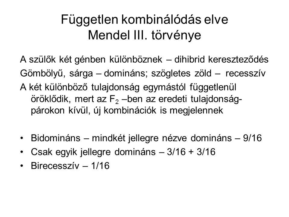 Független kombinálódás elve Mendel III. törvénye A szülők két génben különböznek – dihibrid kereszteződés Gömbölyű, sárga – domináns; szögletes zöld –