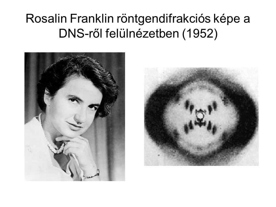 Rosalin Franklin röntgendifrakciós képe a DNS-ről felülnézetben (1952)