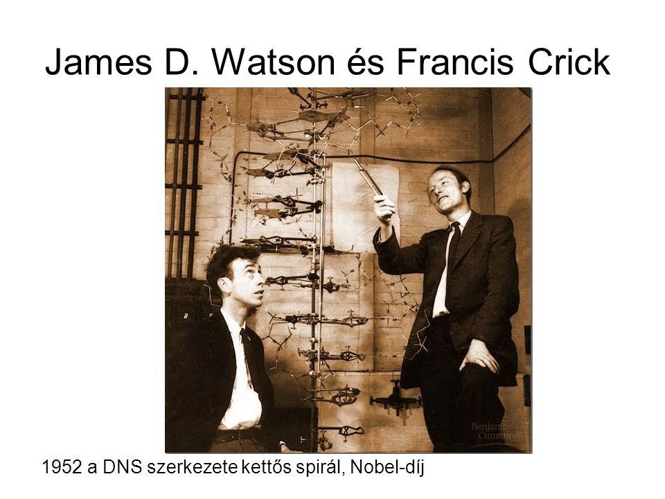 James D. Watson és Francis Crick 1952 a DNS szerkezete kettős spirál, Nobel-díj