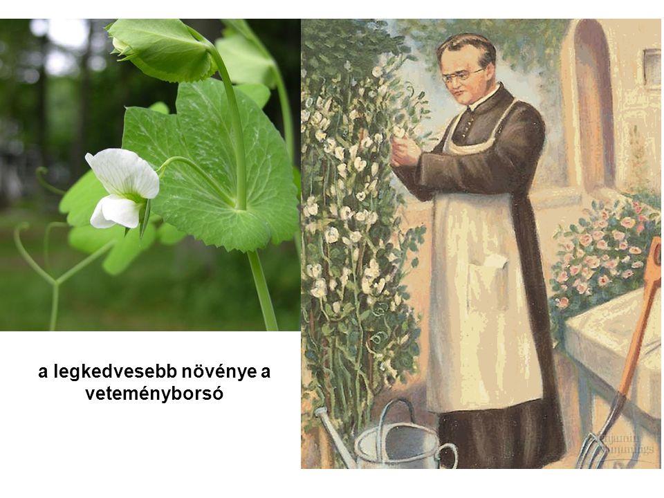 a legkedvesebb növénye a veteményborsó