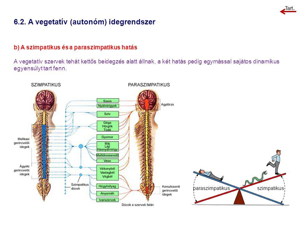 6.2. A vegetatív (autonóm) idegrendszer b) A szimpatikus és a paraszimpatikus hatás A vegetatív szervek tehát kettős beidegzés alatt állnak, a két hat