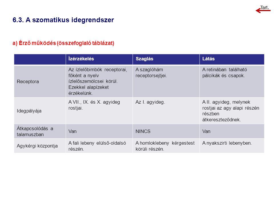6.3. A szomatikus idegrendszer a) Érző működés (összefoglaló táblázat) ÍzérzékelésSzaglásLátás Receptora Az ízlelőbimbók receptorai, főként a nyelv íz