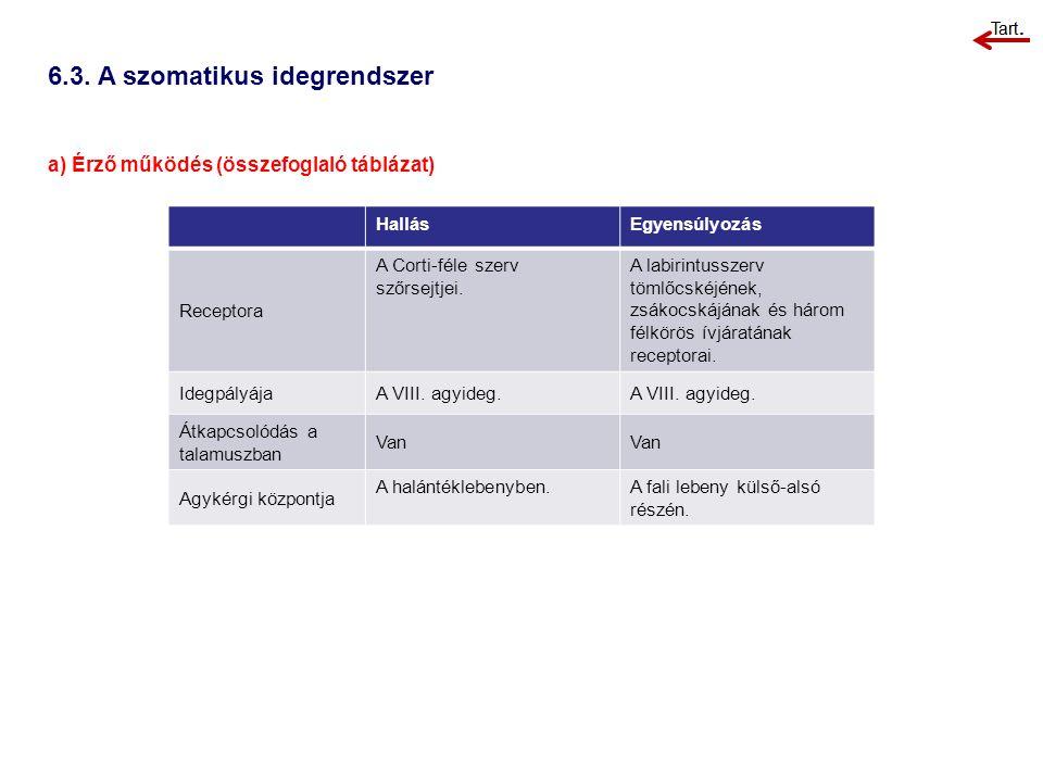 6.3. A szomatikus idegrendszer a) Érző működés (összefoglaló táblázat) HallásEgyensúlyozás Receptora A Corti-féle szerv szőrsejtjei. A labirintusszerv