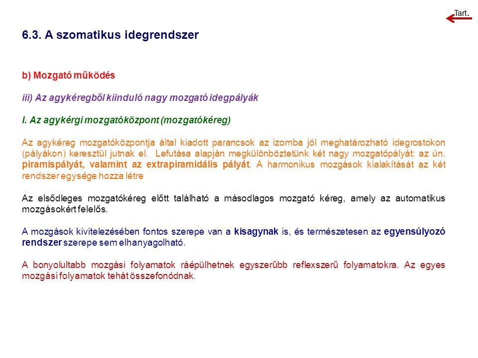 6.3. A szomatikus idegrendszer b) Mozgató működés iii) Az agykéregből kiinduló nagy mozgató idegpályák I. Az agykérgi mozgatóközpont (mozgatókéreg) Az