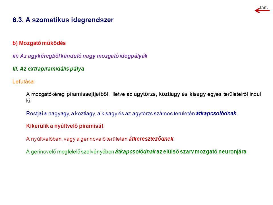 6.3. A szomatikus idegrendszer b) Mozgató működés iii) Az agykéregből kiinduló nagy mozgató idegpályák III. Az extrapiramidális pálya Lefutása: A mozg