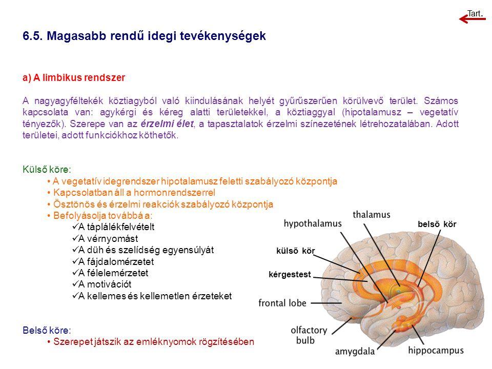 külső kör kérgestest belső kör 6.5. Magasabb rendű idegi tevékenységek a) A limbikus rendszer A nagyagyféltekék köztiagyból való kiindulásának helyét