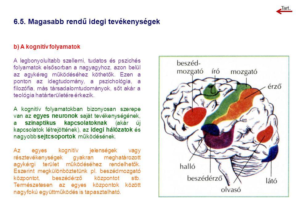 b) A kognitív folyamatok A legbonyolultabb szellemi, tudatos és pszichés folyamatok elsősorban a nagyagyhoz, azon belül az agykéreg működéséhez köthet