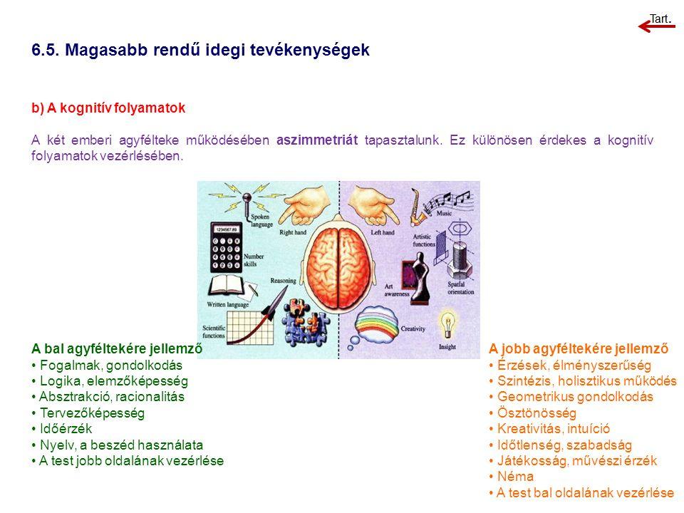 b) A kognitív folyamatok A két emberi agyfélteke működésében aszimmetriát tapasztalunk. Ez különösen érdekes a kognitív folyamatok vezérlésében. 6.5.