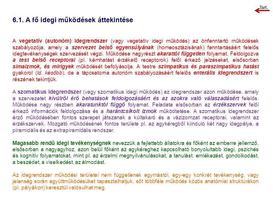 6.1. A fő idegi működések áttekintése A vegetatív (autonóm) idegrendszer (vagy vegetatív idegi működés) az önfenntartó működések szabályozója, amely a