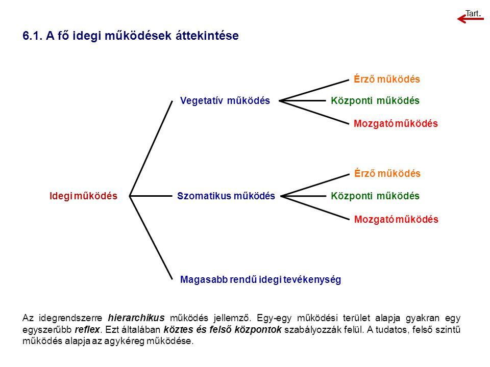 6.1. A fő idegi működések áttekintése Az idegrendszerre hierarchikus működés jellemző. Egy-egy működési terület alapja gyakran egy egyszerűbb reflex.