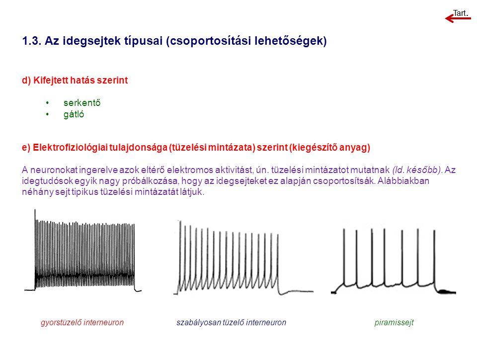 1.3. Az idegsejtek típusai (csoportosítási lehetőségek) d) Kifejtett hatás szerint serkentő gátló e) Elektrofiziológiai tulajdonsága (tüzelési mintáza