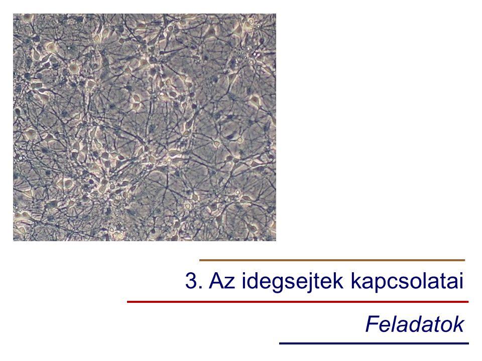 3. Az idegsejtek kapcsolatai Feladatok