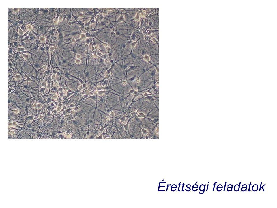 A témakörköz kapcsolódó érettségi feladatok Egy reflexív elemei (2009.