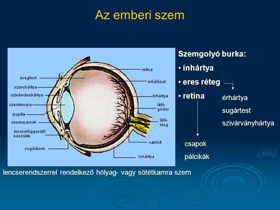 Az emberi szem lencserendszerrel rendelkező hólyag- vagy sötétkamra szem Szemgolyó burka: ínhártya eres réteg retina érhártya sugártest szivárványhárt