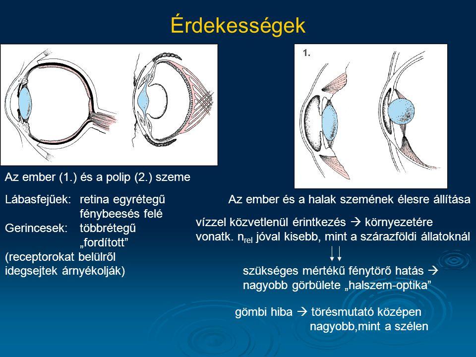 Érdekességek Az ember (1.) és a polip (2.) szeme Az ember és a halak szemének élesre állításaLábasfejűek:retina egyrétegű fénybeesés felé Gerincesek:t