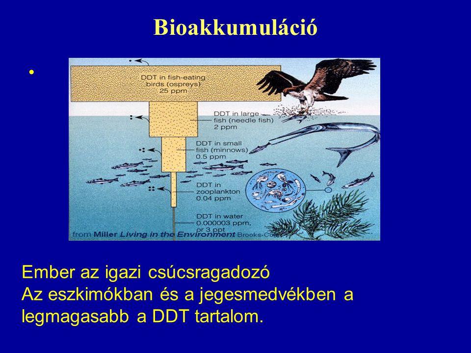 Bioakkumuláció Ember az igazi csúcsragadozó Az eszkimókban és a jegesmedvékben a legmagasabb a DDT tartalom.