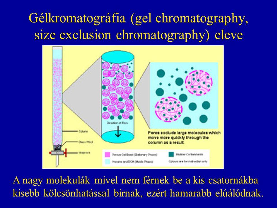 Gélkromatográfia (gel chromatography, size exclusion chromatography) eleve A nagy molekulák mivel nem férnek be a kis csatornákba kisebb kölcsönhatáss