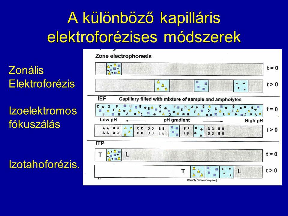 A különböző kapilláris elektroforézises módszerek Zonális Elektroforézis Izoelektromos fókuszálás Izotahoforézis.