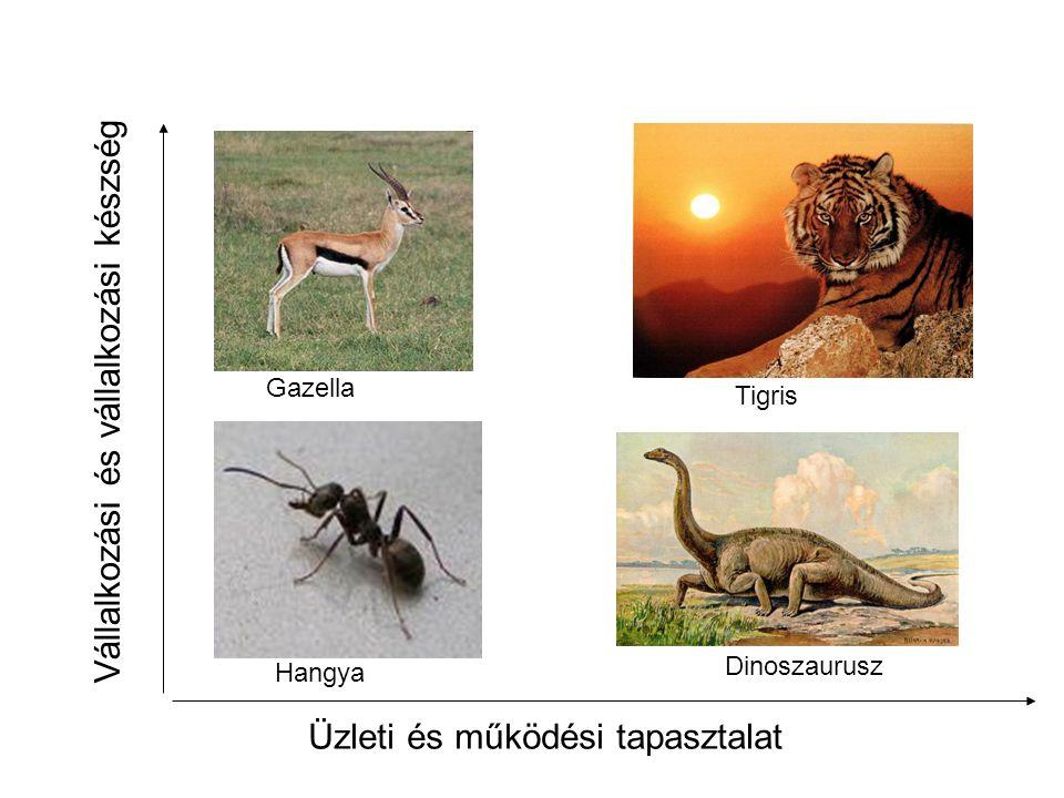 Üzleti és működési tapasztalat Vállalkozási és vállalkozási készség Gazella Hangya Tigris Dinoszaurusz