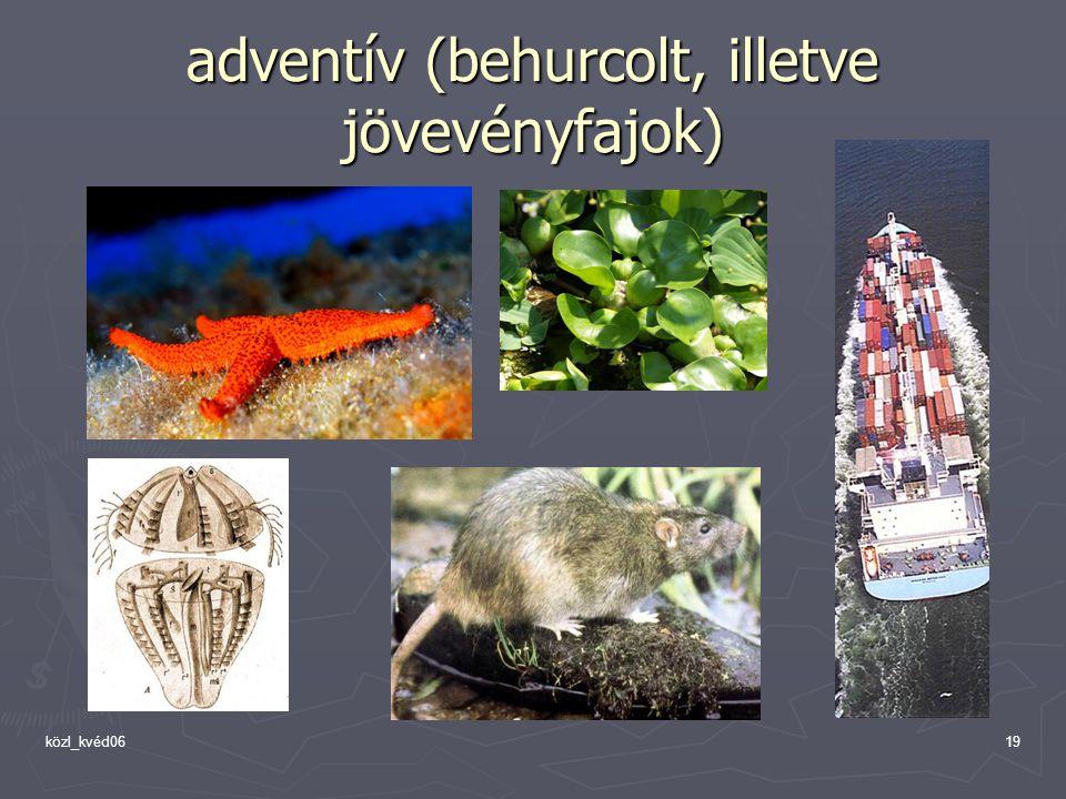 közl_kvéd0619 adventív (behurcolt, illetve jövevényfajok)