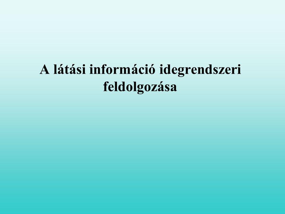 A látási információ idegrendszeri feldolgozása