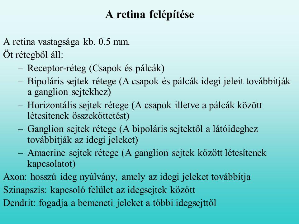 A retina vastagsága kb. 0.5 mm. Öt rétegből áll: –Receptor-réteg (Csapok és pálcák) –Bipoláris sejtek rétege (A csapok és pálcák idegi jeleit továbbít