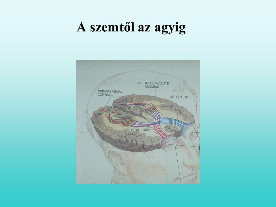 A szemtől az agyig