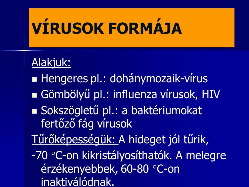 VÍRUSOK FORMÁJA Alakjuk: Hengeres pl.: dohánymozaik-vírus Gömbölyű pl.: influenza vírusok, HIV Sokszögletű pl.: a baktériumokat fertőző fág vírusok Tű