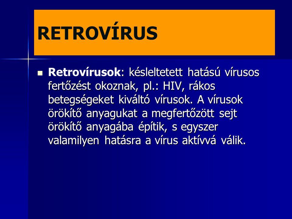 RETROVÍRUS : késleltetett hatású vírusos fertőzést okoznak, pl.: HIV, rákos betegségeket kiváltó vírusok. A vírusok örökítő anyagukat a megfertőzött s