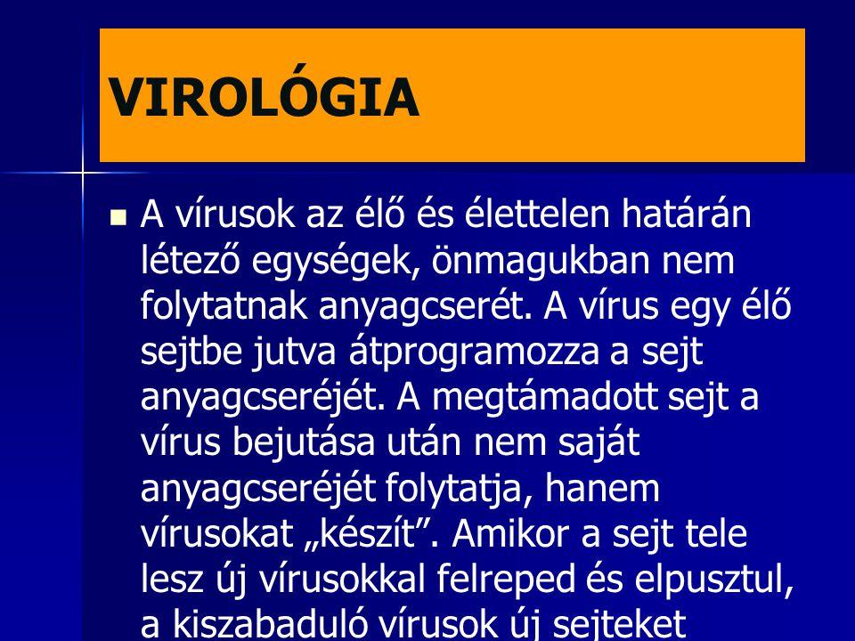 VIROLÓGIA A vírusok az élő és élettelen határán létező egységek, önmagukban nem folytatnak anyagcserét. A vírus egy élő sejtbe jutva átprogramozza a s