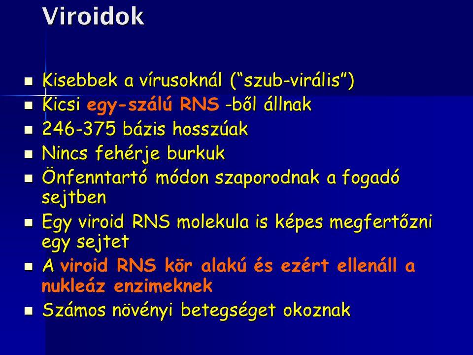 """Viroidok Kisebbek a vírusoknál (""""szub-virális"""") Kisebbek a vírusoknál (""""szub-virális"""") Kicsi -ből állnak Kicsi egy-szálú RNS -ből állnak 246-375 bázis"""
