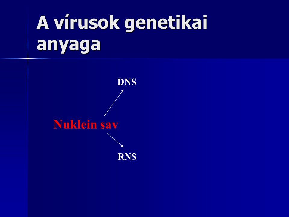 A vírusok genetikai anyaga Nuklein sav DNS RNS