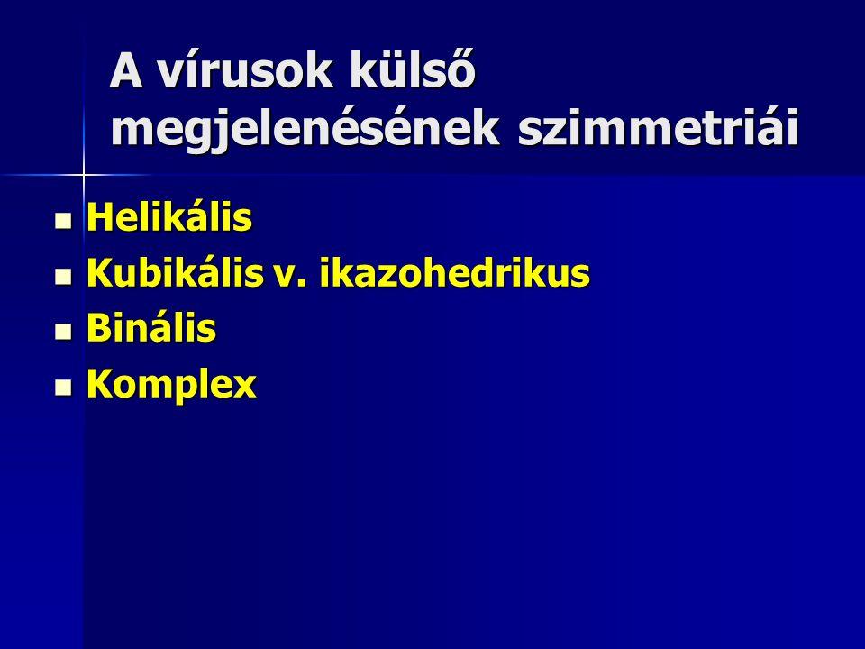 A vírusok külső megjelenésének szimmetriái Helikális Helikális Kubikális v. ikazohedrikus Kubikális v. ikazohedrikus Binális Binális Komplex Komplex