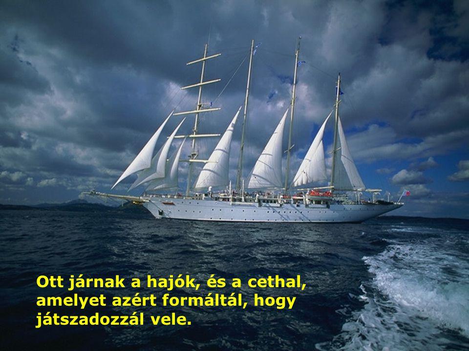 Ott van a nagy és széles tenger! Számtalan lény nyüzsög benne: kisebb és nagyobb állatok.