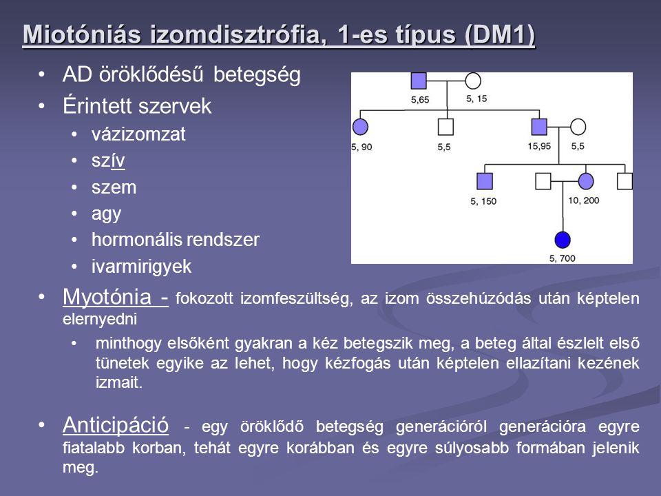 AD öröklődésű betegség Érintett szervek vázizomzat szív szem agy hormonális rendszer ivarmirigyek Myotónia - fokozott izomfeszültség, az izom összehúz