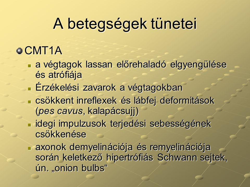 A betegségek tünetei CMT1A a végtagok lassan előrehaladó elgyengülése és atrófiája a végtagok lassan előrehaladó elgyengülése és atrófiája Érzékelési