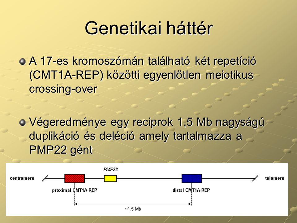 Genetikai háttér A 17-es kromoszómán található két repetíció (CMT1A-REP) közötti egyenlőtlen meiotikus crossing-over Végeredménye egy reciprok 1,5 Mb