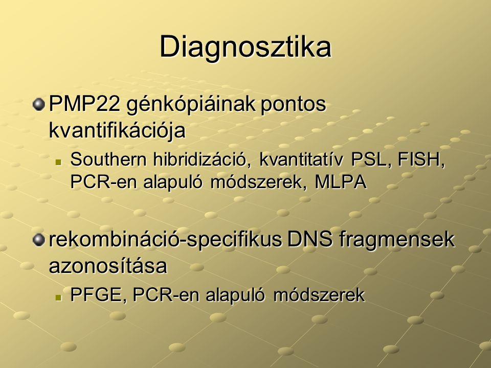 Diagnosztika PMP22 génkópiáinak pontos kvantifikációja Southern hibridizáció, kvantitatív PSL, FISH, PCR-en alapuló módszerek, MLPA Southern hibridizá