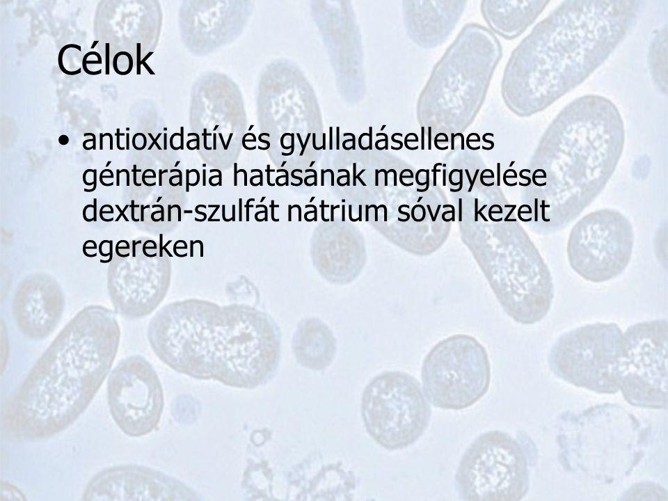 Metódusok 40 Balb/c egér DSS protokoll ( Rochat et al., 2007 ) –enyhe colitis model –10 nap 1%DSS az ivóvízben –10 nap paralel kezelés Baktérium adagolás –SL7207 ( Darji et al.