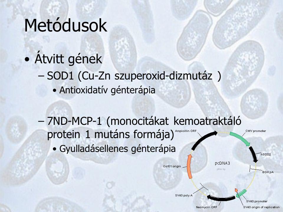 Metódusok Átvitt gének –SOD1 (Cu-Zn szuperoxid-dizmutáz ) Antioxidatív génterápia –7ND-MCP-1 (monocitákat kemoatraktáló protein 1 mutáns formája) Gyulladásellenes génterápia