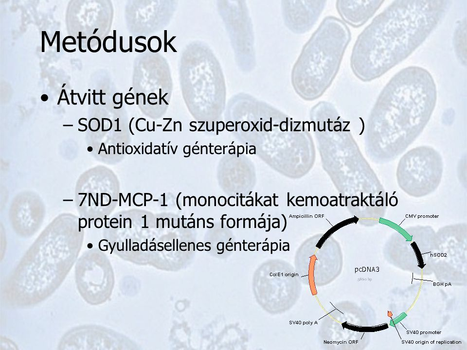 Metódusok 4 csoport –CTRL + médium –DSS + médium –DSS + SL7207/SOD1 –DSS + SL7207/7ND-MCP1