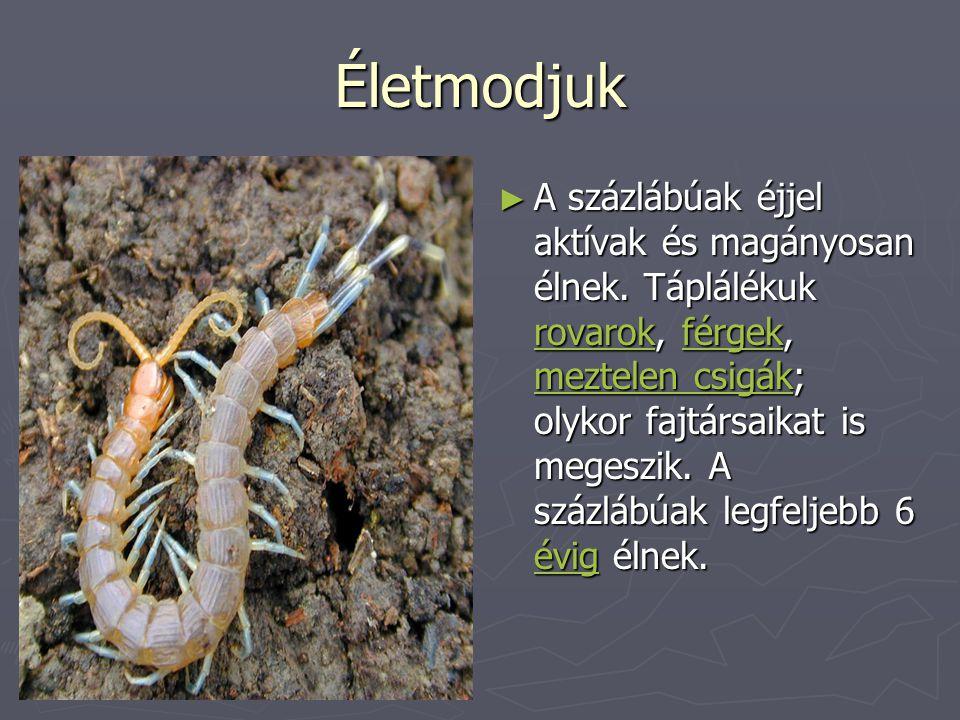 Életmodjuk ► A százlábúak éjjel aktívak és magányosan élnek. Táplálékuk rovarok, férgek, meztelen csigák; olykor fajtársaikat is megeszik. A százlábúa