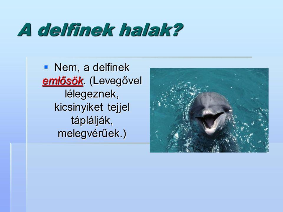 A delfinek halak?  Nem, a delfinek emlősök. (Levegővel lélegeznek, kicsinyiket tejjel táplálják, melegvérűek.)